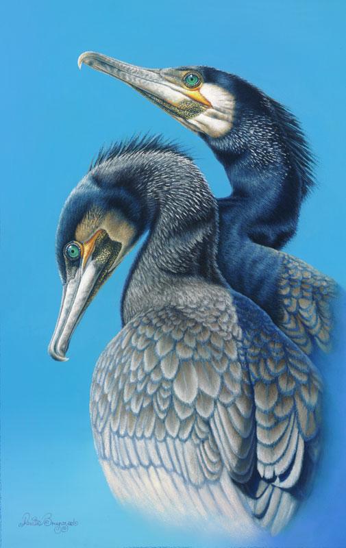 Cormorants Dimensions: 54.5 x 34cm Medium: Pastel