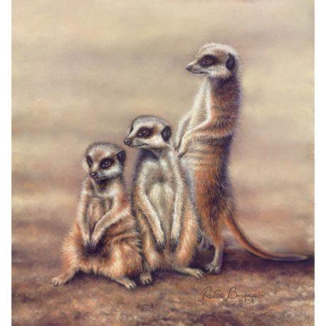 Meerkats-print