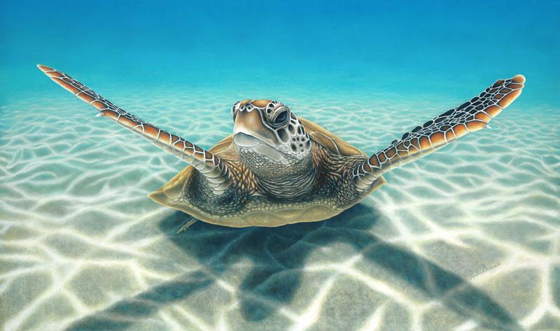 Green Turtle Dimensions: 110 x 65cm  Medium: Pastel
