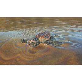 The Hatchling – Loggerhead Turtle
